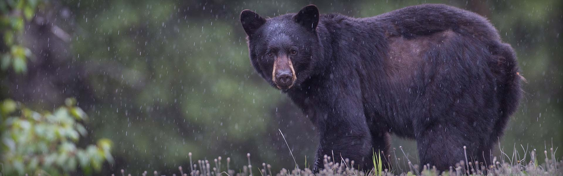 New Mexico Black Bear Hunts