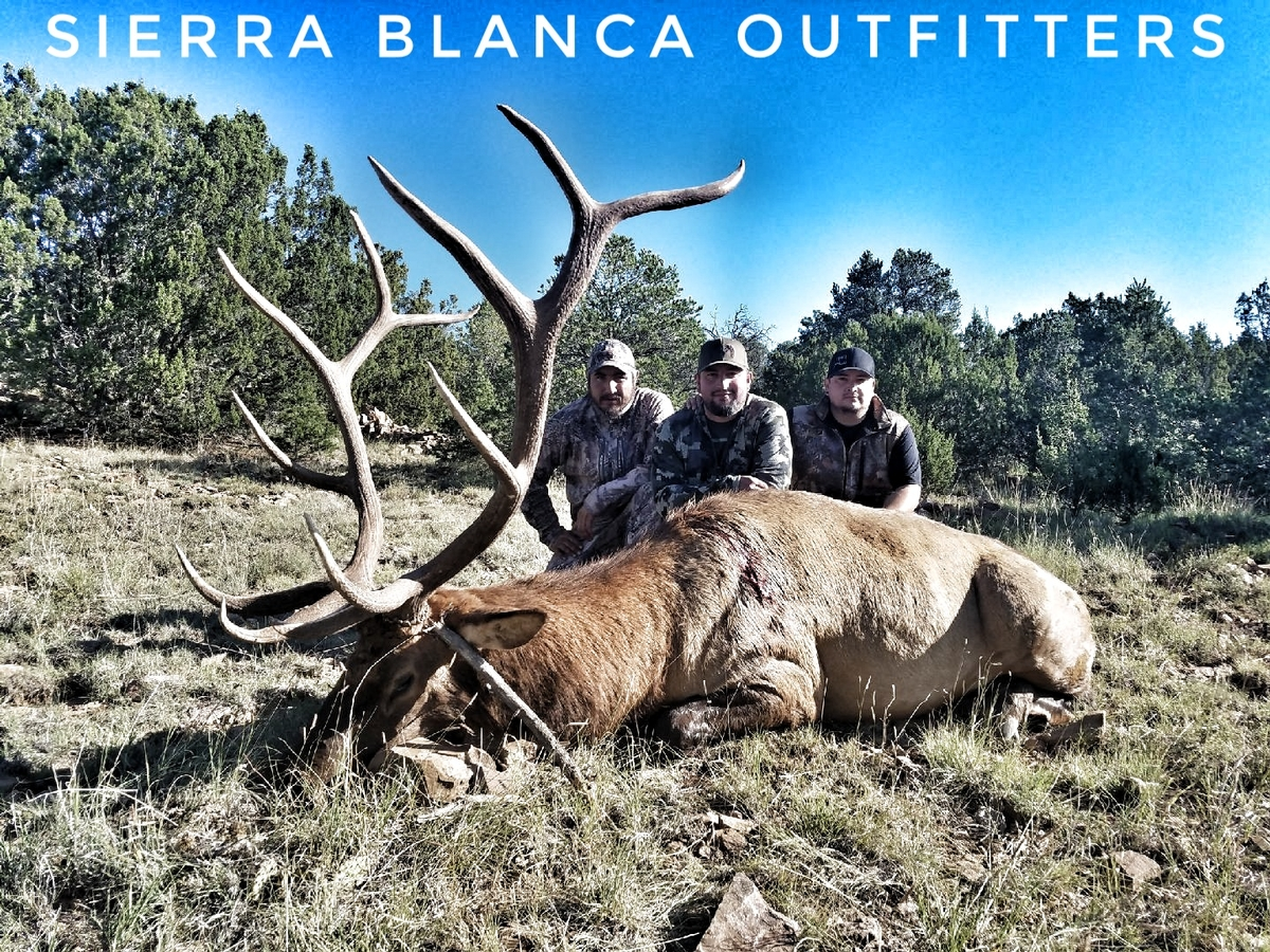 Trophy Elk in New Mexico